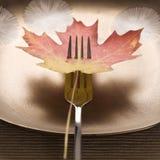叉子被刺穿的叶子槭树 免版税库存照片