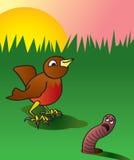 及早获得蠕虫的鸟 免版税库存照片