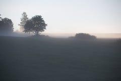 及早,有雾,夏天早晨 库存图片