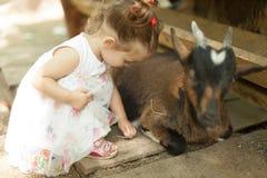 友好的山羊在一个动物园想要一只小的宠物和一些美味的食物从这个逗人喜爱的小女孩 免版税库存照片