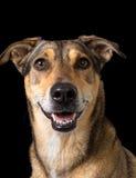 友好的混杂的品种狗 库存照片