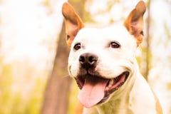 友好的狗微笑 库存照片