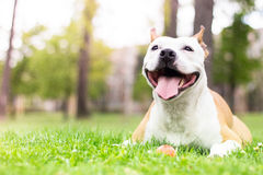 友好的狗微笑 库存图片