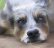 友好的狗 免版税库存照片