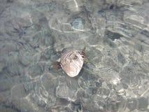 友好的鱼 鱼- Kuzma的名字 免版税库存图片