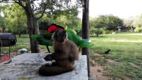 友好的猴子 免版税库存照片