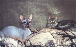 友谊动物,两只猫互相说谎 免版税库存图片