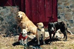 友谊是一切与小狗 免版税图库摄影