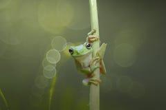 友谊青蛙和鳄鱼II 免版税图库摄影