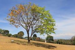 双墓地颜色平静的结构树 免版税图库摄影