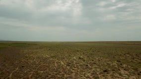双峰的失去控制的骆驼在哈萨克斯坦干燥干草原的背景中 股票视频