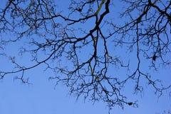 双树在冬天 库存图片