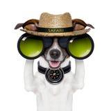 双筒望远镜徒步旅行队指南针狗注意 图库摄影