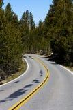 双线道路曲线Admidst杉树 库存图片