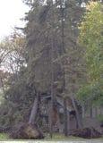 双结构树从飓风桑迪击中了 免版税库存照片