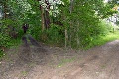 双轨土路在森林 库存图片