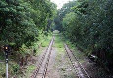 双重铁轨平行在树之间的本质 免版税图库摄影