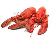 双龙虾(被蒸) -烹饪欢欣 库存照片