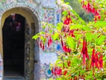反对一个小的教堂的开花的倒挂金钟,根西岛海岛,海峡群岛 免版税库存照片