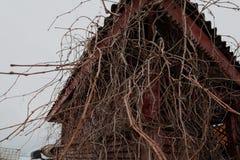 反对一个木眺望台的背景的许多分支 免版税图库摄影