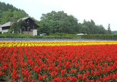 反对一个村庄的花田在北海道的乡下 图库摄影