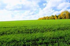 反对一朵清楚的蓝天和雪白云彩的绿色领域 免版税库存照片