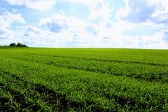反对一朵清楚的蓝天和雪白云彩的绿色领域 库存照片