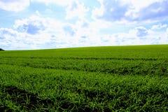 反对一朵清楚的蓝天和雪白云彩的绿色领域 库存图片