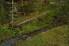反对一条自然小河的下落的林木,特写镜头,自然光,生存自然的概念 免版税库存照片