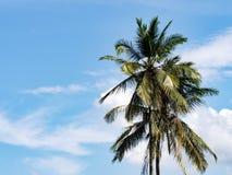 反对与蓝天和白色云彩的可可椰子树 免版税库存照片