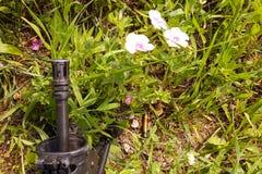 反对五颜六色的花的武器,选择在和平或战争之间 概念:停止冲突,感觉世界秀丽 免版税库存图片