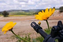 反对五颜六色的花的武器,选择在和平或战争之间 概念:停止冲突,感觉世界秀丽 免版税图库摄影
