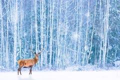反对冬天多雪的森林艺术性的神仙的圣诞节的高尚的鹿 冬天季节性图象 库存照片