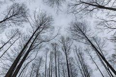 反对冬天天空的树枝 免版税库存照片