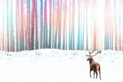 反对冬天幻想五颜六色的森林冬天圣诞节图象的高尚的马鹿 免版税库存图片