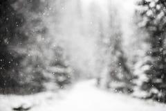 反对冬天森林的雪花 免版税图库摄影