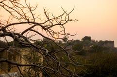 反对古老废墟的干燥树在日落 免版税库存图片