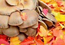 反对叶子背景的蘑菇  免版税库存照片