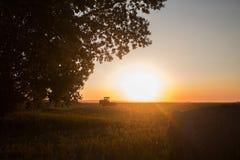 反对叶茂盛树和农场设备的美好的日落 免版税库存图片
