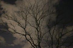 反对多云夜空的不生叶的树 免版税图库摄影