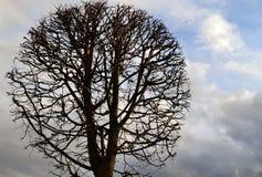 反对多云天空的一棵光秃的树 库存照片