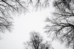 反对多云天空的树剪影 图库摄影
