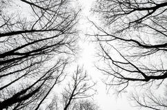 反对多云天空的树剪影 免版税库存图片