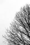 反对多云天空的树枝剪影 免版税库存照片