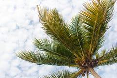 反对多云天空的棕榈树 库存图片