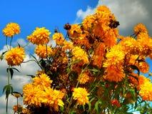 反对多云天空背景的黄色花 库存照片