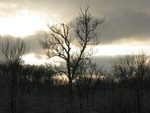反对多云晚上天空日落的光秃的树 免版税库存照片