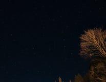 反对夜空的树与星 免版税图库摄影
