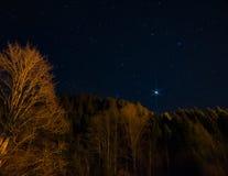 反对夜空的树与星 免版税库存图片