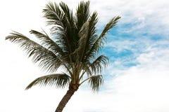 反对天空和云彩的椰子树 热带,夏威夷 免版税库存图片